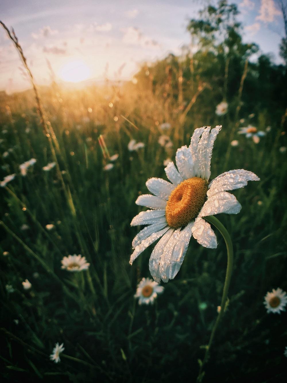 ดอกไม้ที่เหมาะจะปลูก...รับลมหนาว หนาวนี้ดอกไม้บาน